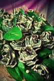 Dollar flowers Royalty Free Stock Photo