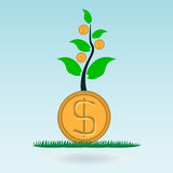 Dollar gold coin, money in the green sprout of tree. Royalty Free Stock Photography
