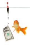 Dollar and goldfish Stock Photo