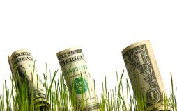 Dollar in grass Royalty Free Stock Image