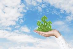 Dollar grass Royalty Free Stock Image