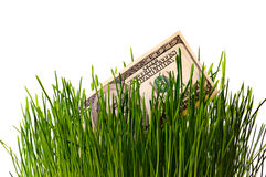 Dollar in green grass Stock Photos