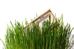 Dollar in green grass Stock Photos