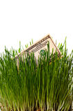 Dollar in green grass Stock Images