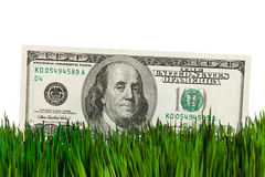 Dollar and Green Grass Stock Photo