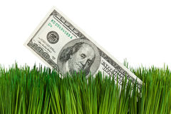 Dollar and Green Grass Royalty Free Stock Photos