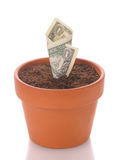 Dollar Growing in Flower Pot Stock Photos