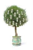 dollar hundra en tree Royaltyfri Foto