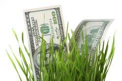 Dollar im Gras Stockbild