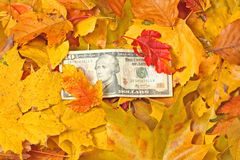 Dollar In Yellow Autumn Leaves Royalty Free Stock Photo