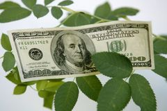 Dollar notes growing from a rose plant. Metaphor of reap the benefits Stock Image