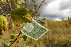 Dollar på en filial Royaltyfri Foto