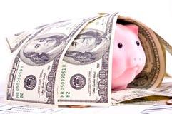 dollar pig Arkivbild