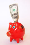 Dollar piggy bank Stock Photos