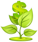 Dollar plant Royalty Free Stock Images