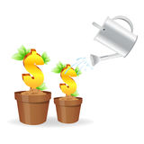 Dollar plant Stock Images