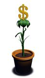 Dollar_plant Royalty Free Stock Image