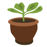 Dollar plant Royalty Free Stock Photos