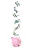 Dollar savings piggy bank Stock Photos