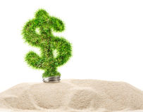 Dollar sign made of green grass as lamp bulb. In sand royalty free stock image