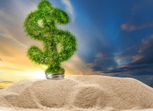Dollar sign made of green grass as lamp bulb. In sand stock photo