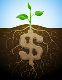Dollar sign is shown as root of plant. Roots and tuber in form of dollar symbol sprout Stock Image