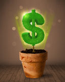 Dollar sign tree coming out of flowerpot Royalty Free Stock Image