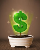 Dollar sign tree coming out of flowerpot Stock Photography