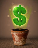 Dollar sign tree coming out of flowerpot Stock Image