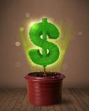 Dollar sign tree coming out of flowerpot. Shining dollar sign tree coming out of flowerpot royalty free stock images