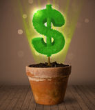 Dollar sign tree coming out of flowerpot Stock Photo