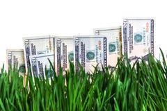 Dollar som växer begrepp Royaltyfria Bilder