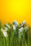 Dollar som växer i grönt gräs Investeringtillväxt Fotografering för Bildbyråer