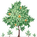 Dollar tree Stock Photography