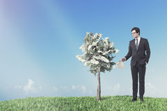 Dollar tree in a pot, meadow, businessman Stock Photography
