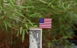 Dollar US et bâton roulé de l'argent un de billet de banque avec le mini drapeau de l'Amérique sur le fond vert de nature photo stock