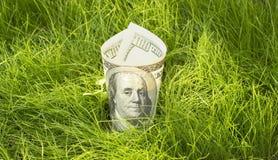 dollar växa Royaltyfri Bild