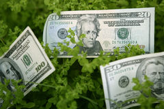Dollaranmerkungen, die von einer Grünpflanze wachsen stockbilder