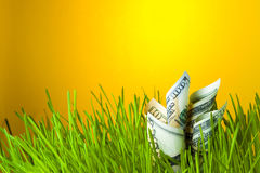 Dollarbanknoten im grünen Gras Stockfoto