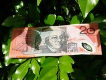 Dollari australiani Fotografie Stock Libere da Diritti