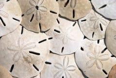Dollari di sabbia Fotografia Stock Libera da Diritti