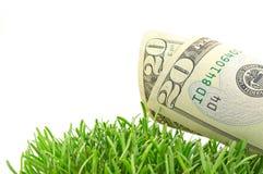 Dollari in erba verde Immagini Stock Libere da Diritti