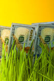 Dollari in erba verde Immagine Stock Libera da Diritti