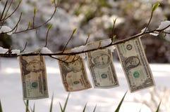 Dollari germoglianti Fotografia Stock Libera da Diritti