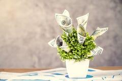 Dollarinstallatie op grafieken royalty-vrije stock afbeelding