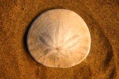 Dollaro di sabbia Fotografia Stock Libera da Diritti