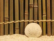 Dollaro di sabbia Fotografie Stock Libere da Diritti