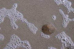 Dollaro di sabbia sulla spiaggia Fotografia Stock Libera da Diritti