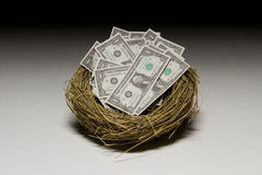 Dollarrekeningen binnen het nest van de vogel stock fotografie