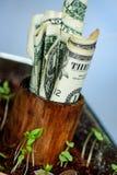 Dollarrekeningen die in pot met zaailing groeien royalty-vrije stock fotografie